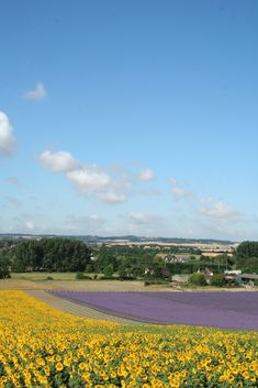 Sunflower & lavender fields at Hitchin, Hertfordshire, England. ( A lovely, very relaxing afternoon of lunch and picking lavender and sunflowers with friends Hertford Castle, Fields Of Gold, Field Of Dreams, English Countryside, France Travel, Beautiful World, The Great Outdoors, Places To See, Lavander