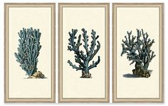 One Kings Lane - Timeless Beauty - Blue Seaweed Triptych Print