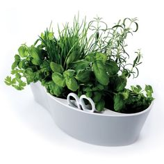 Royal VKB Herb Garden kruidenpot | FLINDERS verzendt gratis