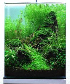 Aquarium einrichtung sorgt f r das wohlf hlen der for Japanische kampffische