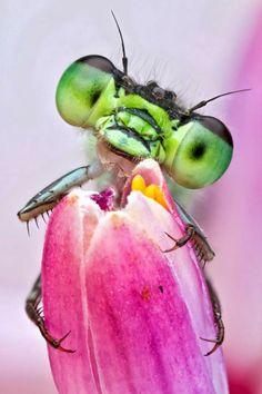 Caras de insectos asombrosos por Colin Hutton « Notas Curiosas