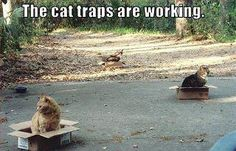 It would definitely work to trap my cats. I swear they act like a box is the coolest thing EVER!