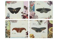One Kings Lane - Breezy Accents - Butterfly Images, 4 Asst.