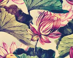 Pink Lotus Botany