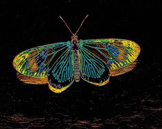 Borboleta surreal / Surreal butterfly
