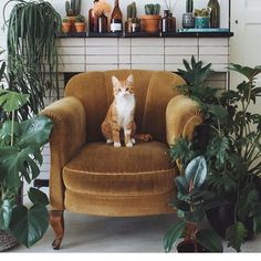 How is that cat not dead? three of those plants are toxic AF #VelvetChair