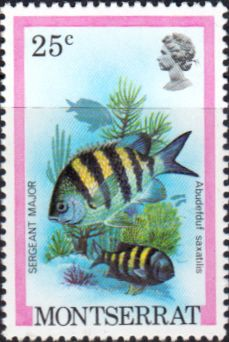 Montserrat 1984 Fish SG 494 Fine Mint SG 494 Scott 449 Other Commonwealth stamps here