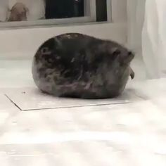 Cute Little Animals, Cute Funny Animals, Cute Cats, Big Cats, Cute Animal Videos, Funny Animal Memes, Pet Memes, Cute Creatures, Animals And Pets