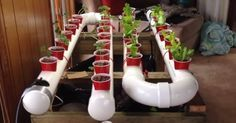 How To Build A Gravity-Based PVC Aquaponic Growing System... - http://www.ecosnippets.com/gardening/gravity-based-pvc-aquaponic-growing-system/