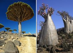 Real Places That Could Be In A Dr. Seuss Book: Socotra Island, Yemen