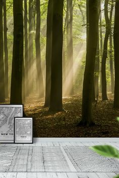 Forest landscape Wall Mural - Wallpaper