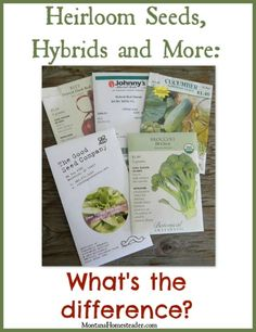 Heirloom seeds, hybrid seeds, GMO, open-pollinated, organic, wild-crafted. What's the difference? Seed types demystified!    Montana Homesteader