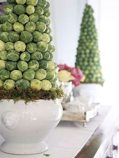 brussel sprouts tree