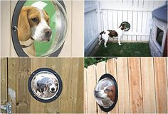 Fence Window for Pets        Deal of the day    http://amzn.to/2c78nHJ