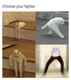 half cat long cat cat memes cats short hair mortal kombat street fighter video game arcade death match lol people organized under the new cat empire pounce choose your own adventure Animal Jokes, Funny Animal Memes, Cat Memes, Dankest Memes, Funny Animals, Cute Animals, Stupid Funny Memes, Funny Relatable Memes, Funny Humor