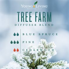 Celebrate the holidays by creating your very own Tree Farm with this essential oil diffuser blend! 2 drops of Blue Spruce, 3 drops of Pine, and 2 drops of Cedarwood essential oils. Essential Oils For Pain, Essential Oil Diffuser Blends, Young Living Essential Oils, Pine Essential Oil, Aromatherapy Diffuser, Blue Spruce, Oils For Energy, Helichrysum Essential Oil, Diffuser Blends
