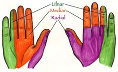 Innervation of the Hands: