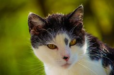 Katze | Flickr - Fotosharing! Photography Photos, Explore, Animals, Photos, Cats, Animaux, Animal, Animales, Exploring