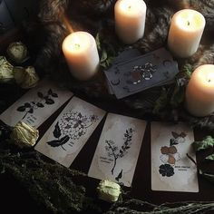 quiet little witch — lilcrystalkitty:  Love this deck ❤️