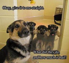 5 Ways How To Show Your Dog Love That They Can Understand - Funny Animals Funny Animal Comics, Funny Animal Quotes, Animal Jokes, Cute Funny Animals, Cute Baby Animals, Funny Cute, Dog Quotes, Stupid Funny, Hilarious