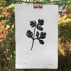 Little fellas available on my shop 🌱❤️ . . #linocut #herbal #etsy #printmaking #etsynewbie #linogravure #grabado #hahnemühle #forest #store…