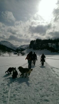 Our #bernese mountain dog, together with a #border_collie and a #golden_retriever playing in #Crampiolo , Alpe #Devero . It was a wonderful sunny Saturday.