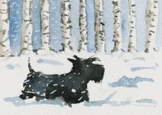 Scottish Terrier Dog in the snow , printed on Fine quality photographic ink-jet Satin paper ,Photo Satin 300gsm.  This luxury heavyweight photo