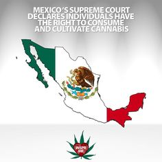 #Mexico's #SupremeCourt Declares Individuals Have the Right to Consume and Cultivate #Cannabis  Landmark Case Could Pave the Way for #CannabisLegalization  11/04/2015  Today in a 4 to 1 vote Mexicos Supreme Court ruled that the prohibition of the consumption and cultivation of marijuana for personal use is unconstitutional.  The Court determined that the #prohibition of the consumption of #marijuana  and its cultivation for non-commercial ends  violates the #humanright to the free…