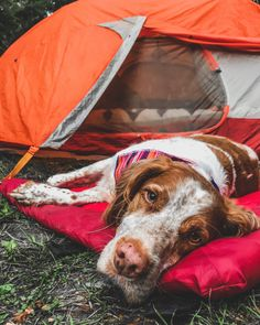 The Loft Wander Bed is a dog travel bed that can be used for pet travel, camping, or hiking. It's a waterproof dog bed so it's perfect for camping or hiking. Camping With Cats, Hiking Dogs, Dog Beach, Pet Travel, Outdoor Dog, Training Your Dog, Dog Photos, Nature Photos, Dog Life