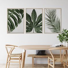 Tropical Leaves Wall Art Print Set | Collection 10 Tags: palm leaf; delicious monster; monstera deliciosa; swiss cheese plant; aralia leaf; plant decor; leaf print; plant print; wall art; wall print; wall decor; tropical; leaves; leaf; closeup; detail; greenery; bedroom decor; leaf; leaves; green decor; home decor; office decor; greenery and wood; dining room decor