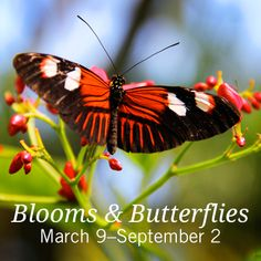 Blooms & Butterflies at Franklin Park Conservatory! #Columbus #Ohio