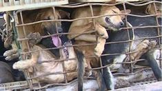 Petition · AnimalsAsia: End the Asian Dog Meat Trade · Change.org