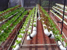 Uso de sustratos en acuaponia | Horticultura y Cultivos Ornamentales