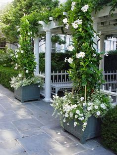 Creating Stunning Pergola Decorations Inspiring Ideas , A pergola has to be constructed to withstand the elements. A pergola may also be connected to the home to cover a deck or patio. Wooden pergolas also . Container Design, Container Plants, Container Gardening, Gazebos, Arbors, Pot Plante, White Gardens, Dream Garden, Garden Pots