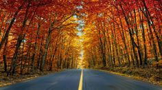 The Muskoka region of Ontario, Canada © Alessandro Cancian/National Geographic Traveler Photo Contest) Ontario, National Geographic Photo Contest, Meanwhile In Canada, The Road, Beautiful Places, Beautiful Pictures, Concours Photo, Tree Photography, Wonderful Picture