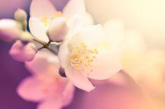 Joyous Jasmine #valentines #sweetlove #adore #sayitwithflowers #aromatherapy