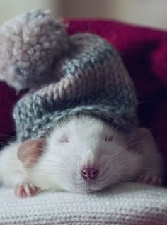 Fancy mouse. So cute and cuddly.