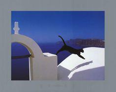 Greek Cat Pierre Putelat