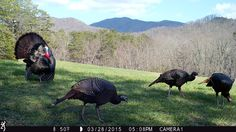 Review for the 2015 @browningcams Strike Force HD