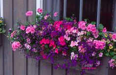 beautiful flower  window box   http://www.facebook.com/pages/Suzi-Homefaker/157277567665756