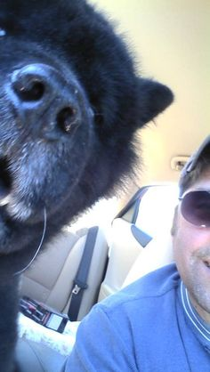 Please vote for this entry in Rebel's 'Take a Selfie with Your Human' Sweepstakes!