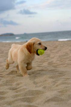 havin' a ball