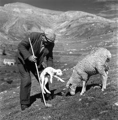 Robert Doisneau. Animaux (la transhumance), Le berger et l'agneau nouveau né 1958