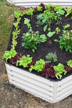 How to build an easy vegetable garden: This easy to build vegetable garden involves no digging. It's one of the easiest ways you can start a patch from scratch involves no back-breaking digging! Instead, this method consists of building up layers of mulch, soil and compost in a raised bed to create a nutrient-rich environment in which plants can thrive.