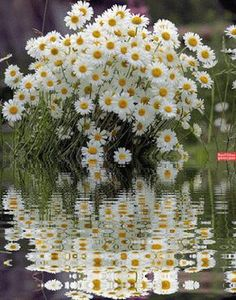I love these Flowers : I love these Flowers Flores Bonitas de Papel Dibujo ? Flowers Gif, Flowers Nature, Flowers Garden, My Flower, Pretty Flowers, Flower Power, Wild Flowers, Daisy Love, Water Reflections