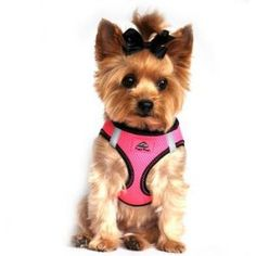 American River Dog Harness Top Stitch Collection >>> Read more at the image link. (This is an affiliate link and I receive a commission for the sales)