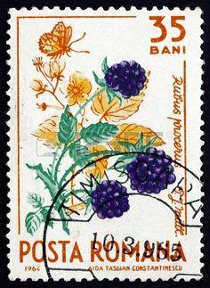 ROMANIA - CIRCA 1964: a stamp printed in the Romania shows Wild Blackberries, Rubus Procerus P.J.Mull, Natural Fruit, circa 1964