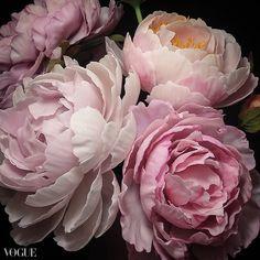 Cold Porcelain Flowers, Rose, Plants, Pink, Plant, Roses, Planets