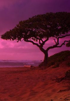 Kauai Sunset in Magical Magenta