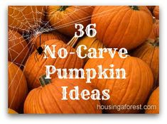 36 No-Carve Pumpkin Ideas